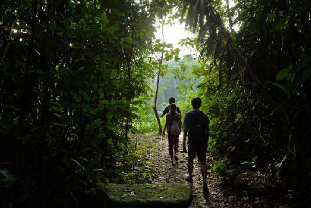 """Pengunjung berlari-lari anak di Rifle Range Link. Laporan penilaian kesan alam sekitar mendapati akan ada kesan """"sederhana"""" ke atas Simpanan Semula Jadi Tadahan Central  apabila kerja ujian tanah awal bagi Laluan Rentas Pulau (CRL) MRT bermula pada suku ketiga 2016. Gambar ST"""