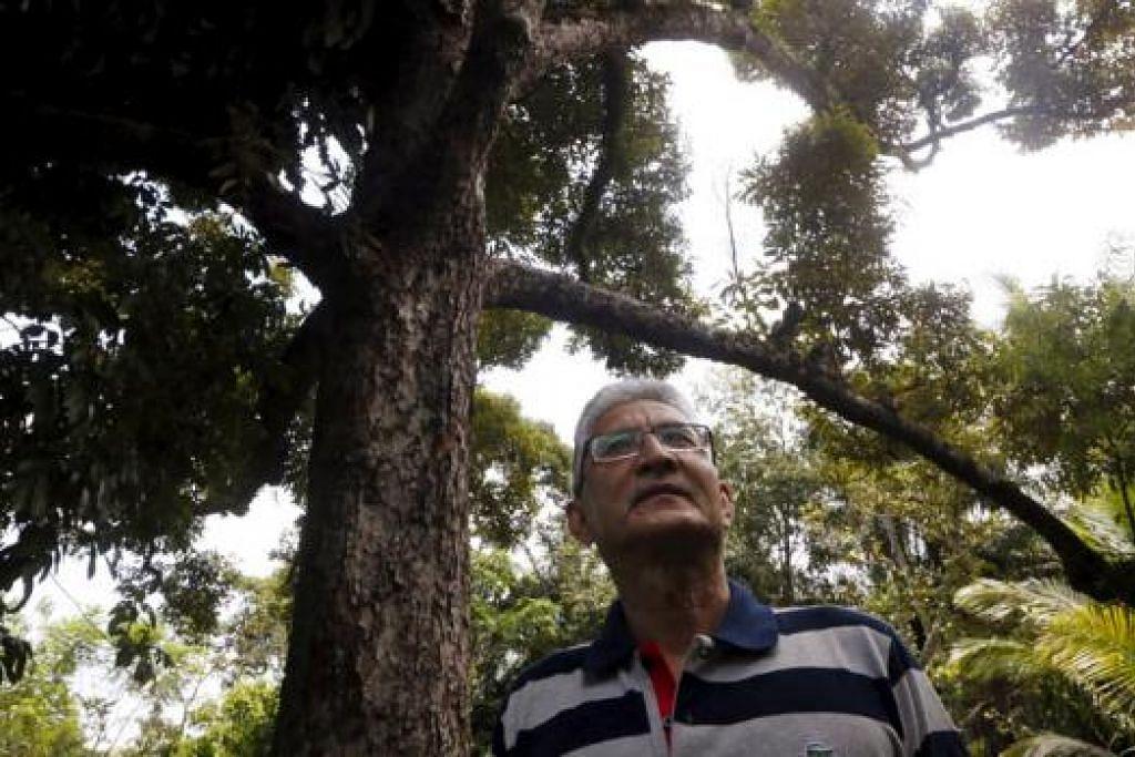 TIDAK LAGI BERBUAH: Encik Abdul Rani berdiri di depan dusun duriannya yang sudah tidak lagi berbuah ekoran kegiatan perlombongan bauksit di Kuantan. - Foto REUTERS