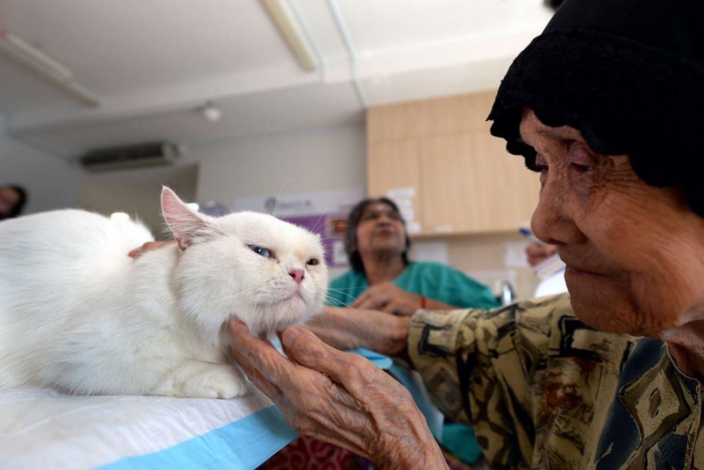 PELIHARA KUCING Terapi kucing penghapus duka