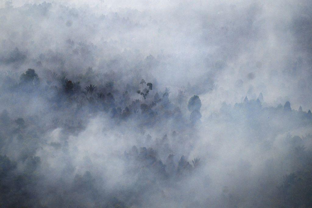 Agensi pulihara hutan Indonesia hadapi cabaran