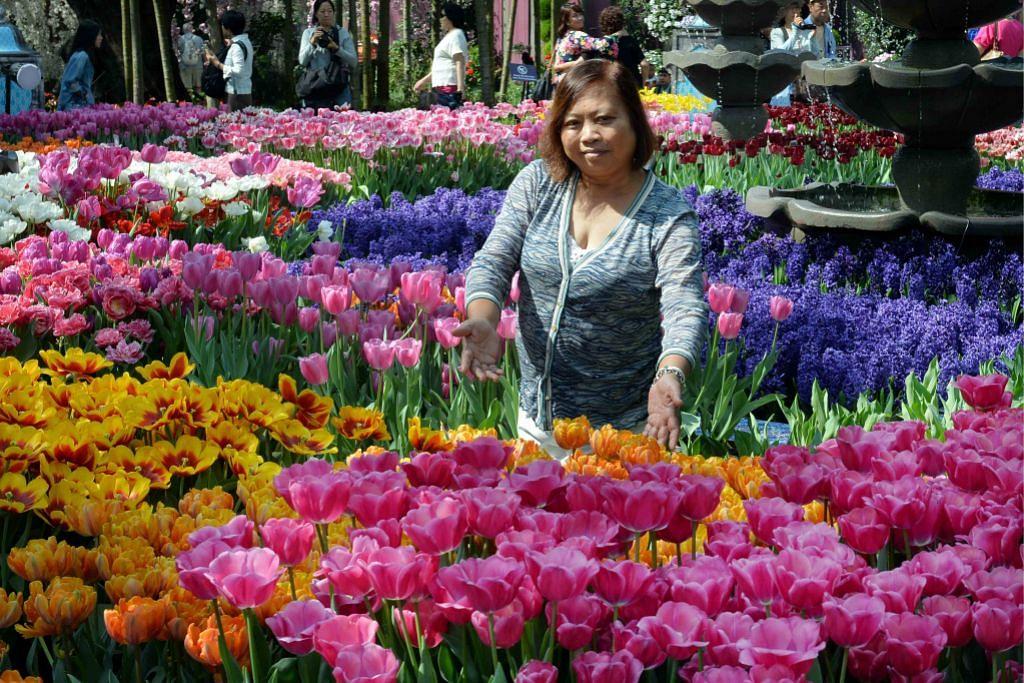 Korban masa dan tenaga pamer keindahan tulip