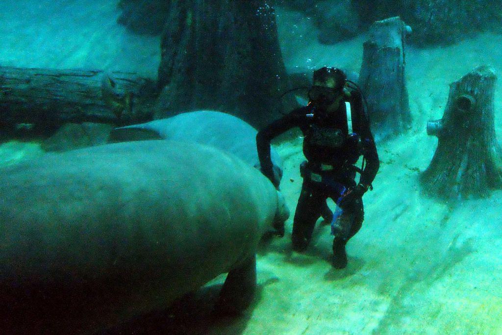 Teruja jadi 'bapa angkat' kepada anak dugong
