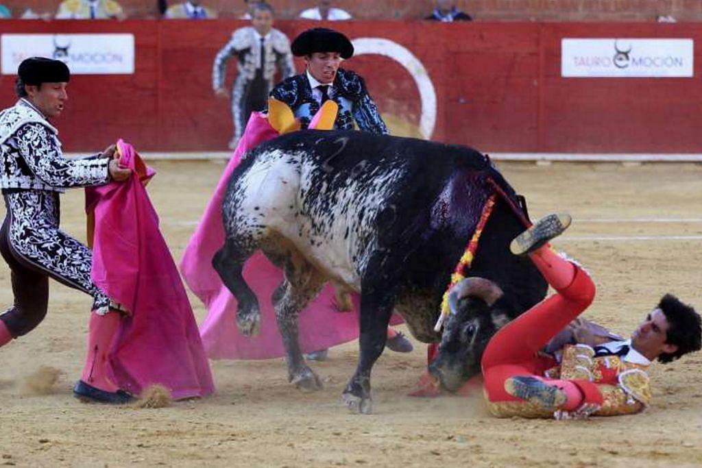 Matador terbunuh dirodok lembu