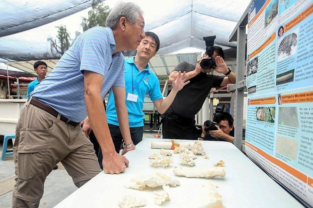 Tujuh projek sains marin kaji daya tahan terumbu karang, pertumbuhan alga