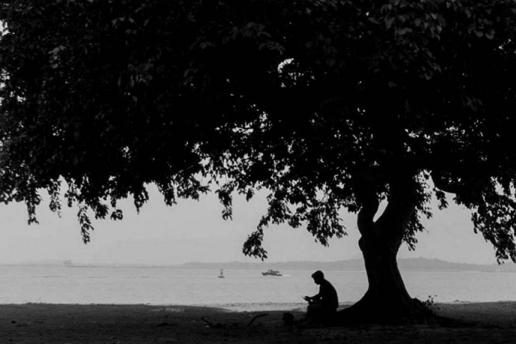 Encik Lee memuat naik gambar hitam dan putih seorang lelaki duduk bersendirian di bawah pokok di Taman Pantai Changi, yang dipetik beliau pada hujung minggu Tahun Baru. Dalam posnya, Encik Lee berkata lelaki itu kelihatan seperti seorang pekerja asing sedang menelefon rumah menggunakan telefon bimbit, dan beliau menggesa orang ramai supaya menghargai sumbangan pekerja asing di sini.
