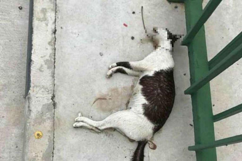 Seekor kucing ditemui mati dengan kerongkongnya dikelar berhampiran stesen MRT Yishun.