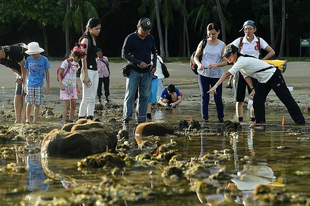 Hidup-hidupan air Pulau Sisters lebih dilindungi