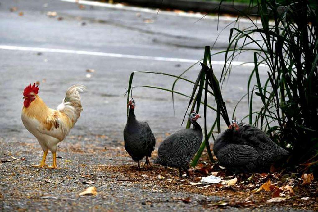 Penghapusan haiwan hanya sebagai langkah akhir