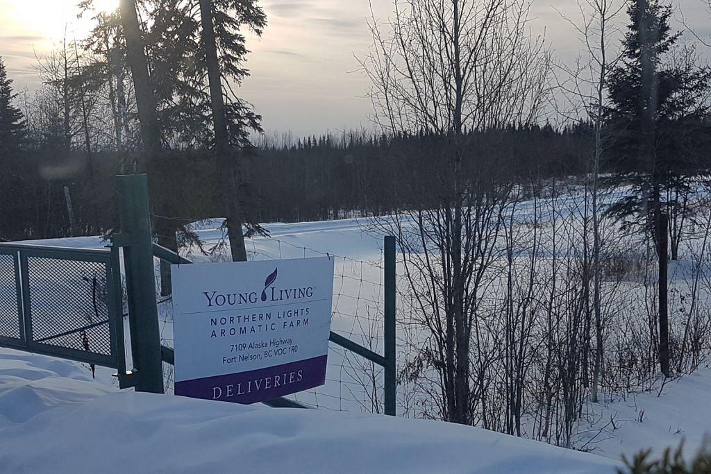 Cari rahsia minyak pati di Canada
