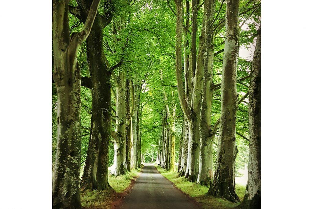 Tertawan pada alam desa Scotland