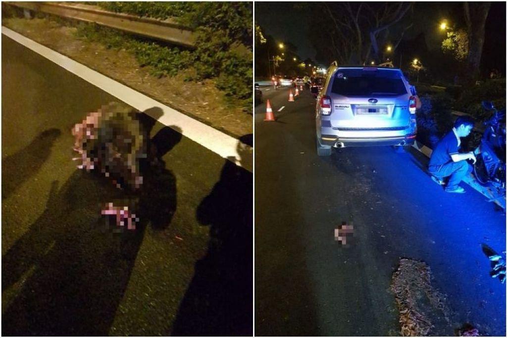 NAHAS DI BKE: Pengguna Facebook Alex Soo memuat naik gambar menyusuli nahas jalan raya melibatkan babi hutan bunting itu. Beberapa anak babi hutan itu turut dilihat berdekatannya.