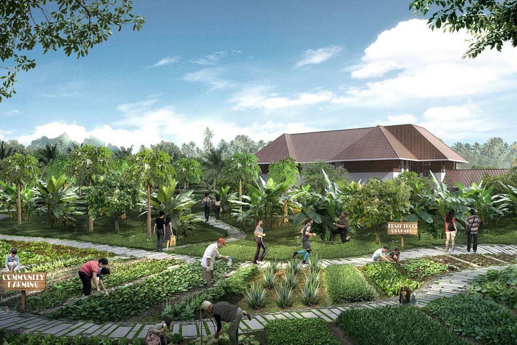 DUSUN BUAH DALAM HAB: Dusun buah dan kebun buat masyarakat ini adalah sebahagian daripada projek hub bersepadu Sembawang. Kebun ini akan ditanam dengan tanaman yang boleh dimakan seperti pokok koko dan roselle. - Foto HAB SUKAN DAN MASYARAKAT SEMBAWANG