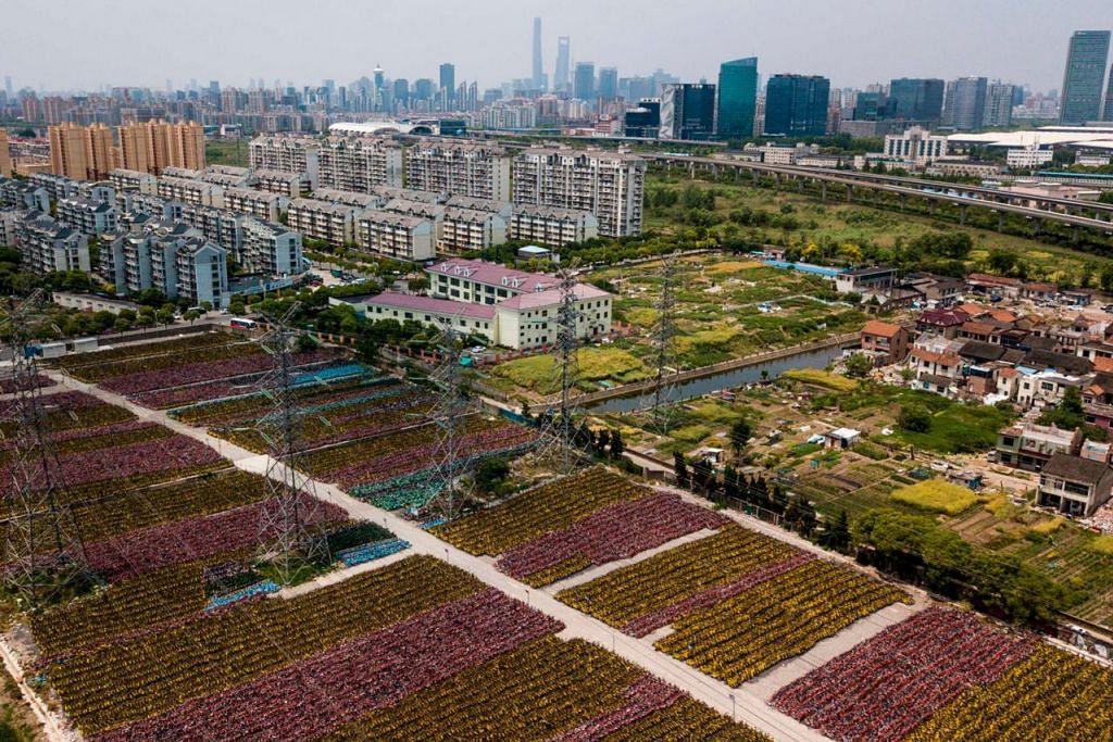 PUSARA BASIKAL: Pemandangan bak di ladang ini sebenarnya ialah ribuan basikal kongsi yang terbengkalai di Shanghai (atas) dan Hangzhou di wilayah Zhejiang.-  Foto: AFP, REUTERS