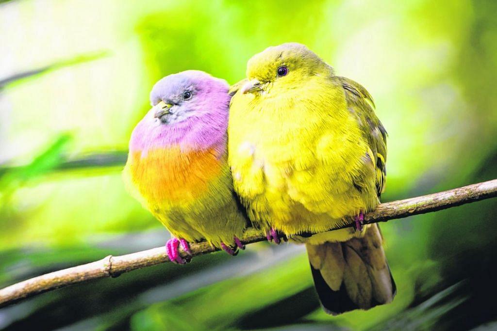 Download 810+ Foto Gambar Burung Merpati Pasangan  Paling Keren Gratis