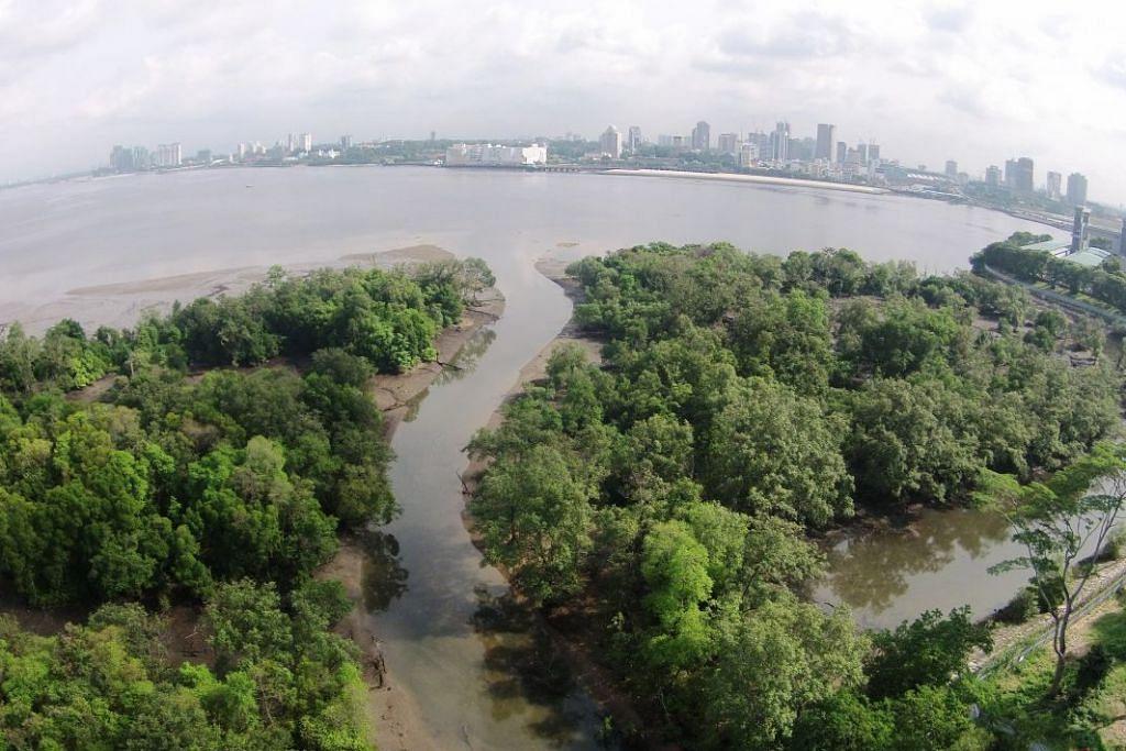 TERSERGAM INDAH: Pemandangan dari atas ini menunjukkan kawasan yang bakal dijadikan Taman Paya Bakau dan Lumpur Mandai. Semasa air surut, kawasan yang luas ini menjadi tumpuan bagi burung-burung mencari makan.