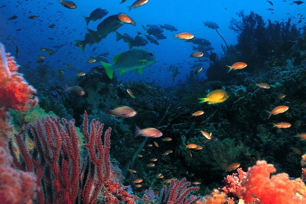 DEMI HIDUPAN MARIN: Bahan kimia dalam pelindung matahari atau sunblock dikatakan mengancam hidupan marin dan maka itu penggunaannya diharamkan di Palau. - PENGUASA PELANCONGAN PALAU