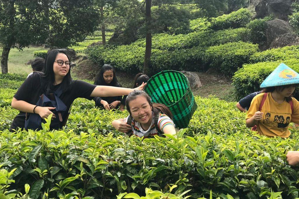 PETIK DAUN TEH: Seronok memetik daun teh di ladang. - Foto ihsan FARAH SUHAIMI SAAT
