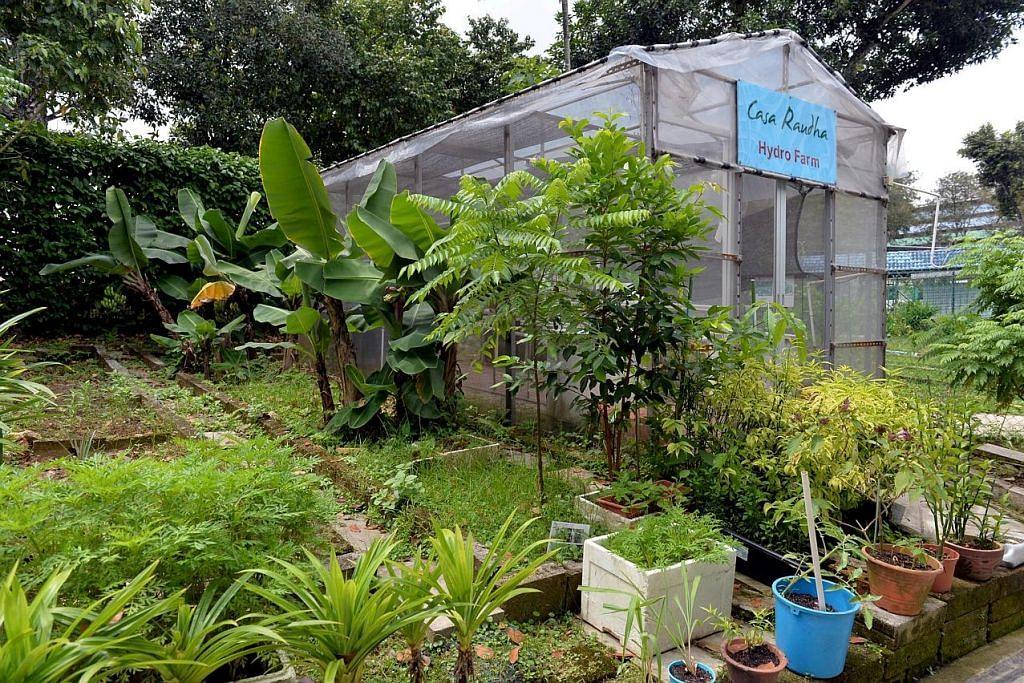 Keluaran sayur kebun hidrofonik dan akuafonik naik kepada 100 kg sebulan