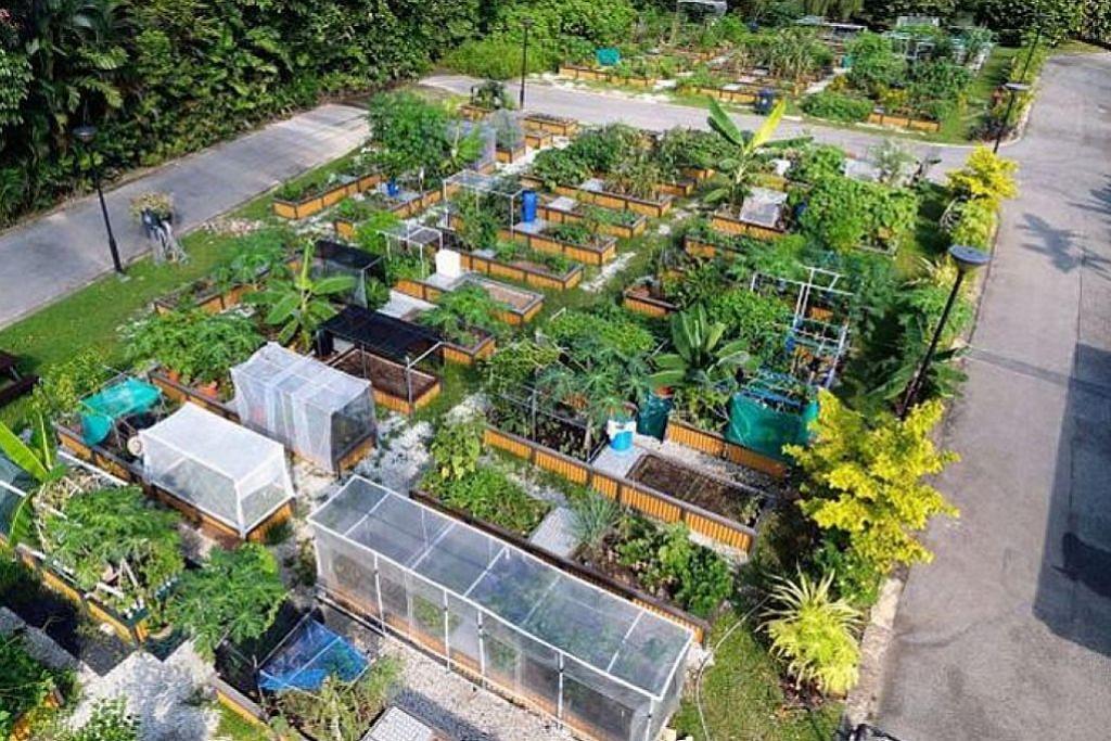Peluang 'miliki' kebun sendiri