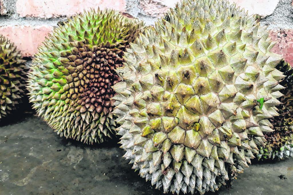 Kirim pengalaman melancong KEMBARA Raub bandar emas Malaysia
