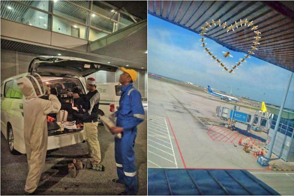 PINDAH SERANGGA: Malaysia Airports Holdings Berhad (MAHB) bersama pasukan kawalan serangga menjalankan operasi menghalau lebah di Lapagan Terbang Antarabangsa Kuala Lumpur (KLIA). - Foto TWITTER