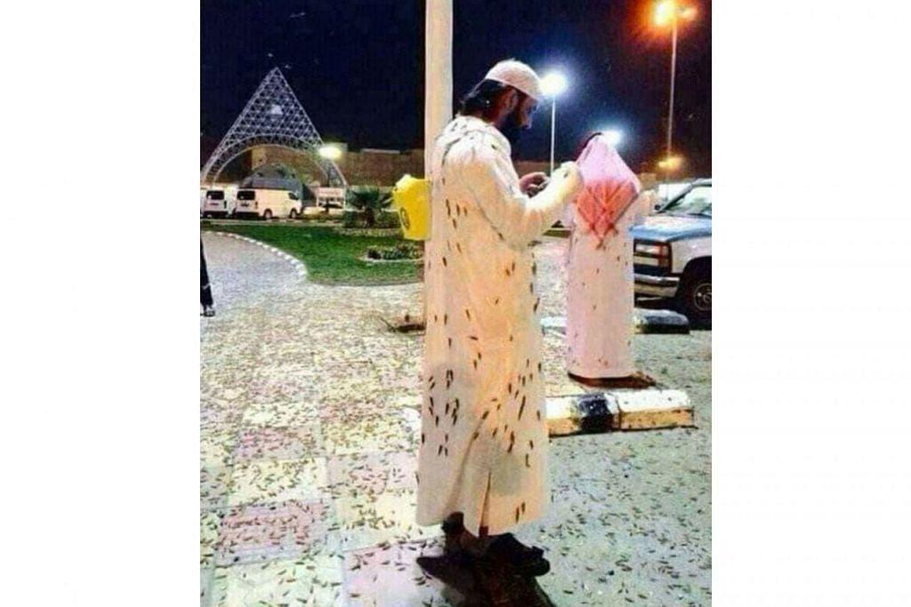 DIKERUMUNI SERANGGA: Jemaah ini dikerumuni serangga di kawasan berdekatan Masjidil Haram  - Foto TWITTER
