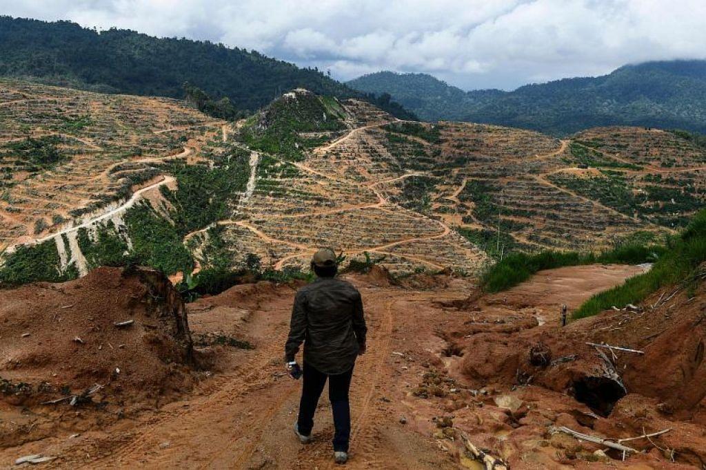 Ladang durian di Raub Pahang. Foto: AFP