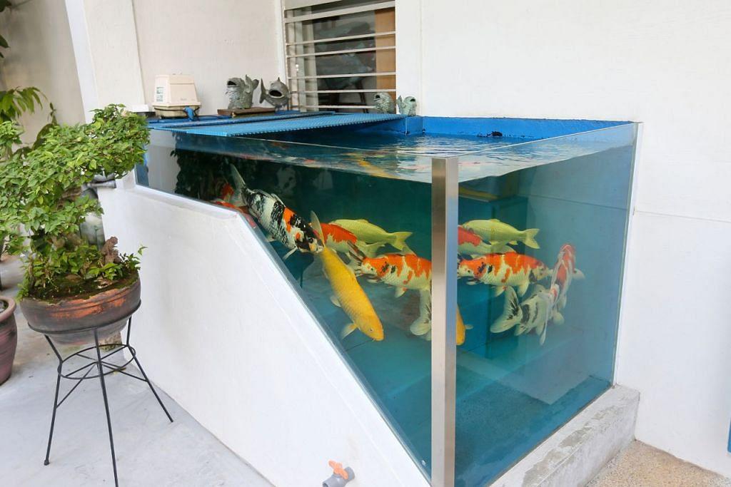 TANGKI IKAN KOI DI TANGGA: Ikan-ikan koi berenang-renang di tangki yang dipasang di tangga pintu masuk flat di Tampines Street 41. - Foto BH oleh JONATHAN CHOO.
