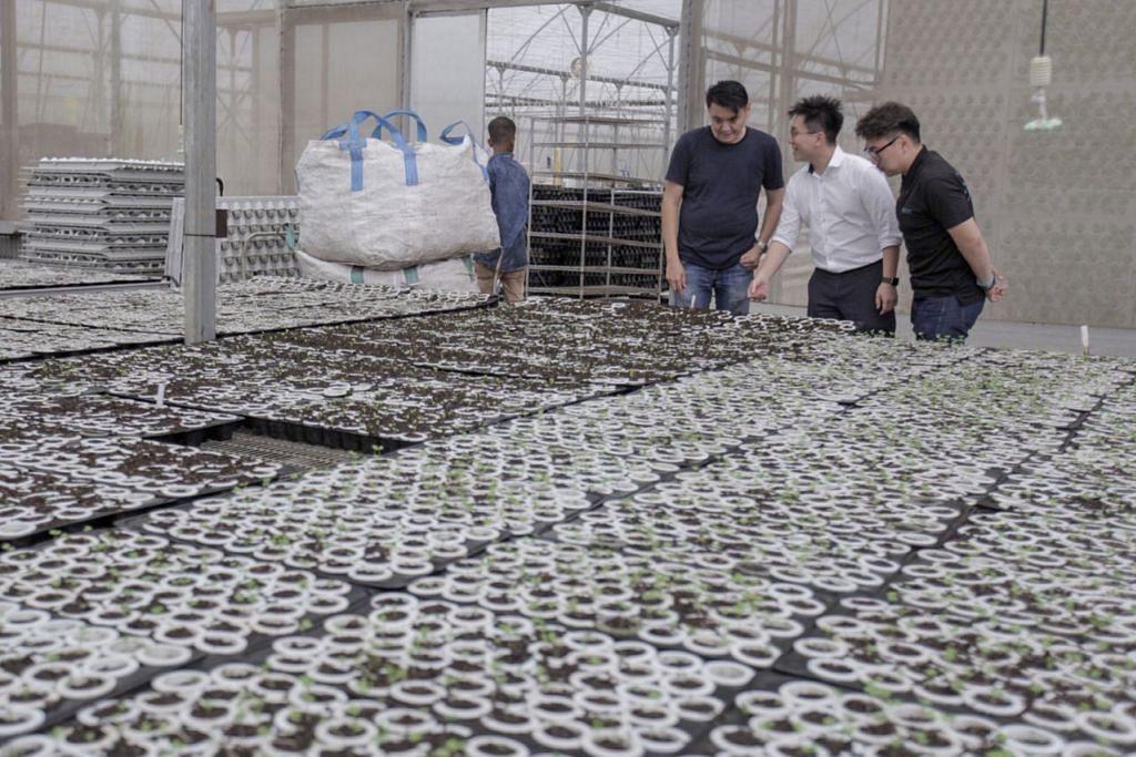 GUNA TEKNOLOGI: Syarikat Meod memperkenalkan 'pertanian pintar' yang membolehkan lebih banyak jenis sayur-sayuran ditanam dalam persekitaran dalam bangunan. Ia menggunakan kaedah penanaman menegak/vertikal bagi memanfaatkan ruang terhad. - Foto BH oleh IQBAL FAIZAL