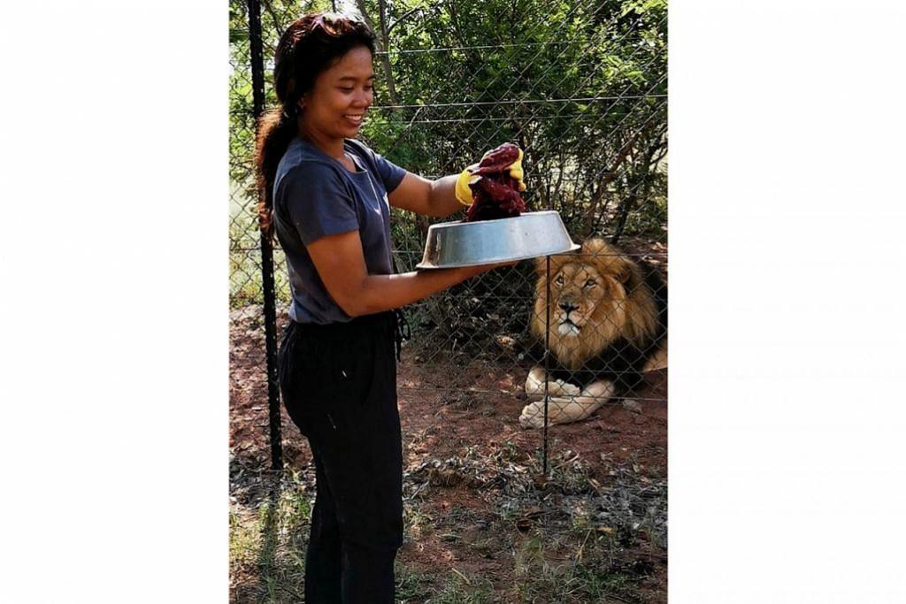 TIDAK GENTAR: Cik Anisa turut belajar cara memotong kayu dan juga mencincang daging kuda untuk diberikan kepada haiwan dalam kawasan perlindungan haiwan Kevin Richardson Wildlife Sanctuary.  – Foto ihsan ANISA ABDULLAH