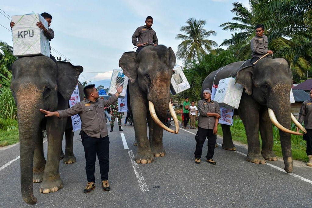 PEMBANTU BESAR PILIHAN RAYA SEHARI TERBESAR: Gajah digunakan untuk menghantar bahan pilihan raya ke sebuah pusat mengundi di Trumon, Aceh Selatan semasa pilihan raya serentak - presiden dan parlimen - Indonesia pada 17 April. Ia pilihan raya sehari terbesar di dunia. - Foto AFP