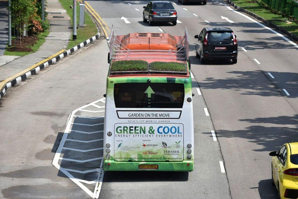 'BUMBUNG HIJAU': Keberkesanan 'kebun bumbung' bas akan diketahui akhir kajian tiga bulan ini, yang libatkan 10 bas SBS Transit berkhidmat di Toa Payoh, Tampines dan Orchard Road. - Foto BH oleh JASMINE CHOONG