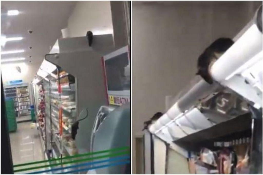Klip video yang diposkan dalam Youtube dan Twitter nenunjukkan sekurang-kurangnya enam tikus di pasar raya itu. - Foto GINKAI19990324/TWITTER