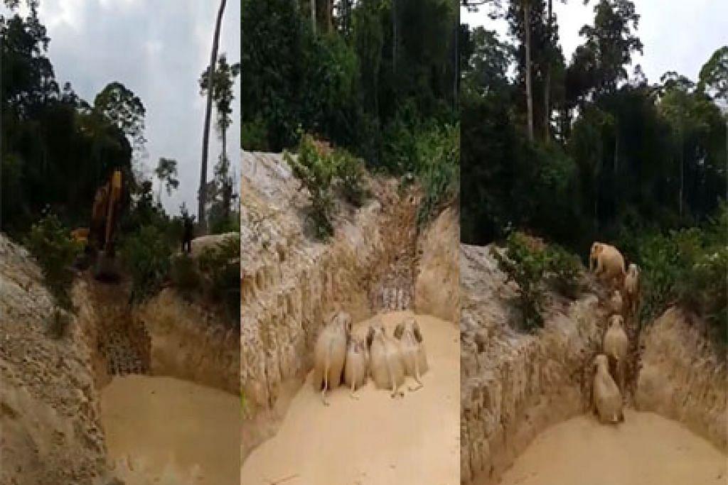 GAJAH TERPERANGKAP BERJAYA DISELAMATKAN: Bantuan daripada sebuah syarikat perlombongan diperlukan untuk menggunakan mesin penggali mereka untuk mengorek dan membuat laluan keluar untuk gajah tersebut, dalam operasi menyelamatkan gajah yang mengambil hampir enam jam. -Foto FACEBOOK / JABATAN PERHILITAN SEMENANJUNG MALAYSIA.