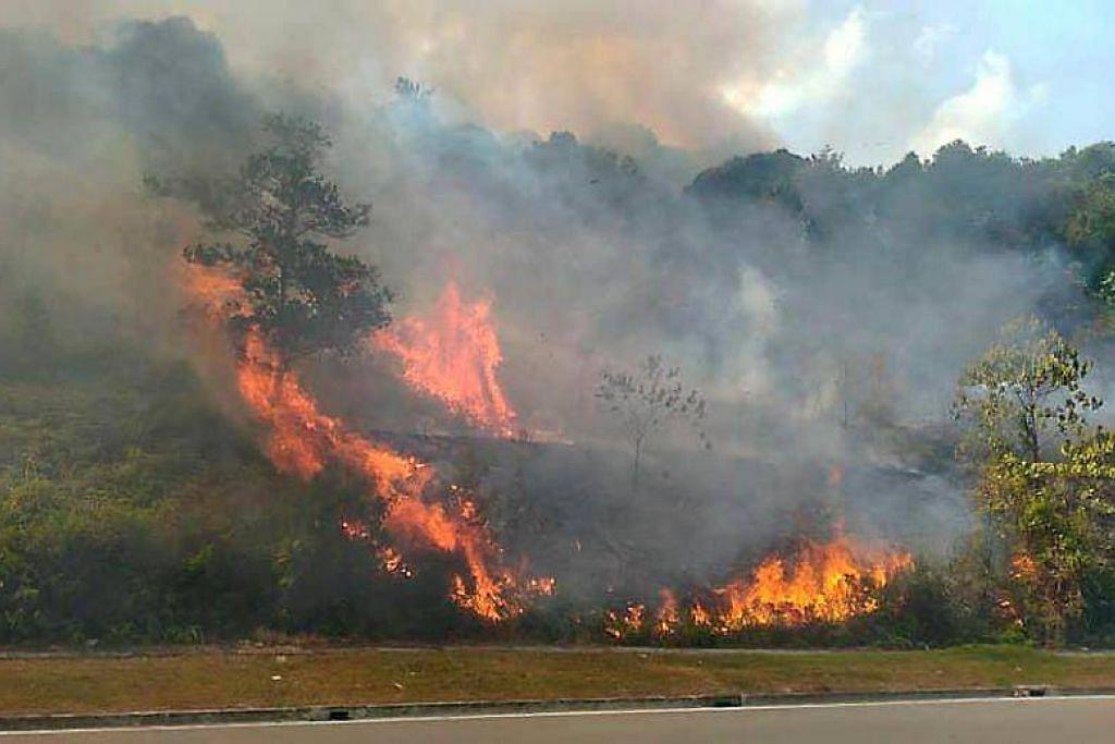 KEBAKARAN HUTAN SEBESAR 98 HEKTAR: Cuaca kering dan angin kencang menyebabkan kebakaran hutan di Iskandar Puteri semakin merebak. -Foto: The Star.