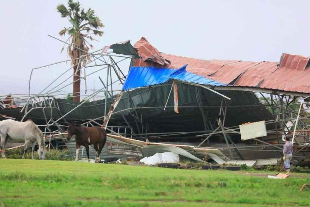 Kuda bersebelahan tempat berteduh yang runtuh akibat tiupan angin. - Foto YONHAP