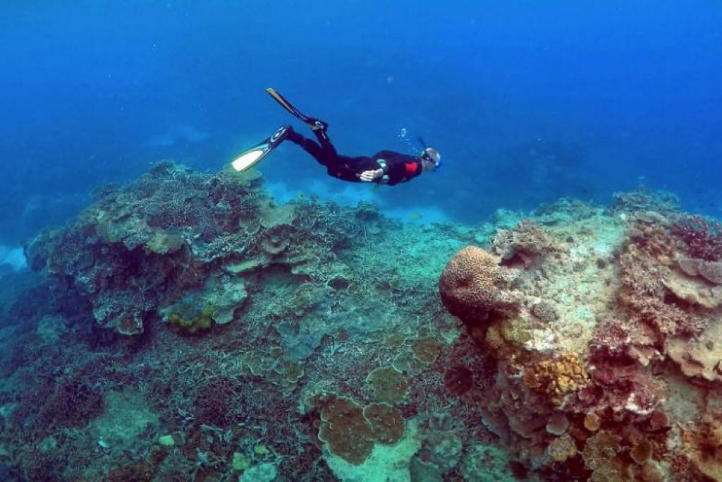 PELANCONG BIMBANG: Serangan ikan jerung di sekitar Kepulauan Whitsunday (gambar) telah meningkatkan kebimbangan pelancong yang mengunjungi pantai di sana. -Foto REUTERS.