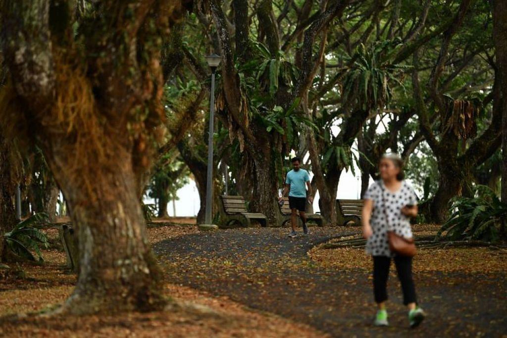 Taman Pasir Ris pada 26 September 2019. Habitat hutan bakau di taman ini merupakan satu-satunya kawasan di Singapura di mana orang ramai boleh mendekati kunang-kunang. - Foto ST oleh LIM YAOHUI