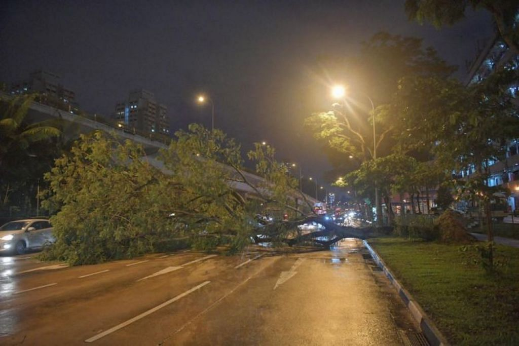 Tree falls along Braddell Road, closing three out of four lanes