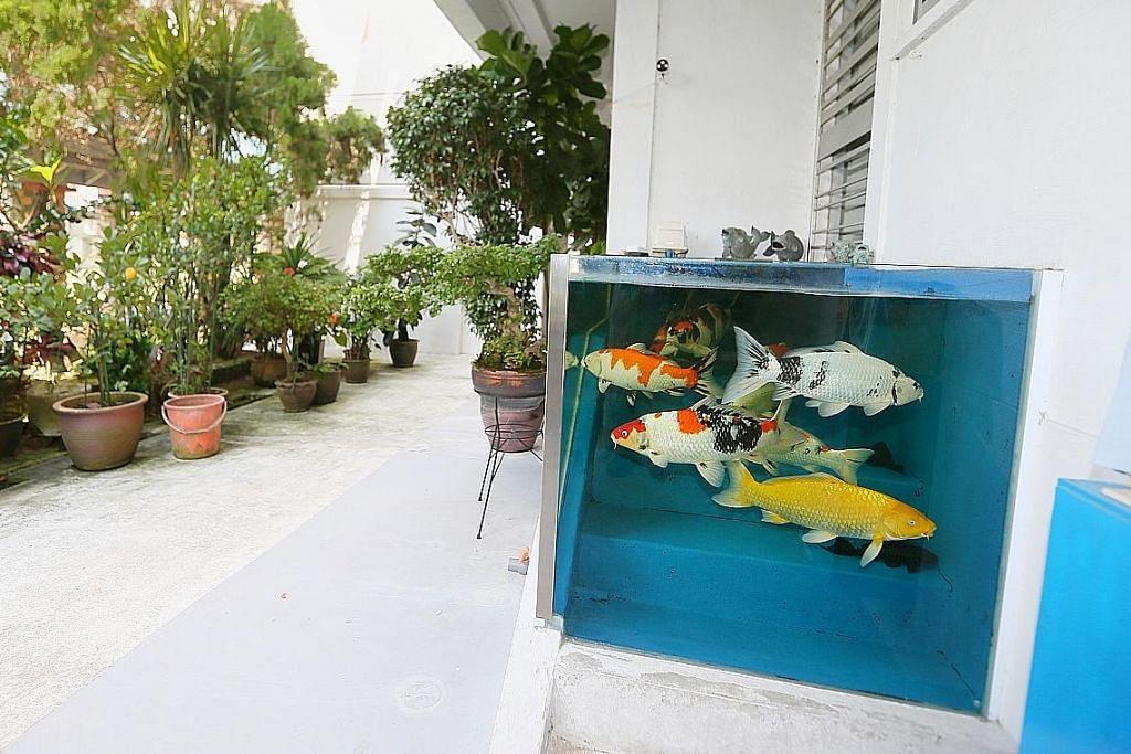 Tangki ikan Tampines ada harapan
