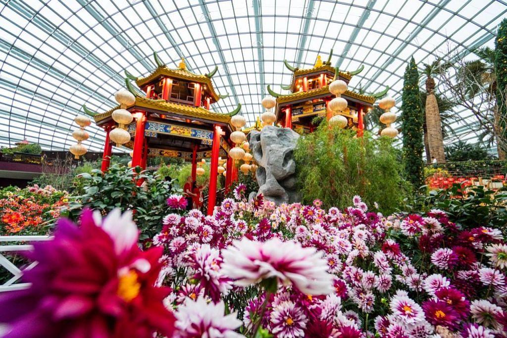 Pameran bunga dahlia istimewa sempena Tahun Baru Cina