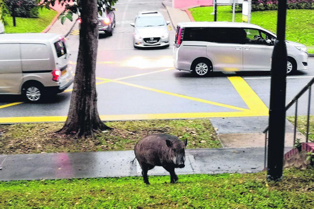 Apabila haiwan masuk bandar...