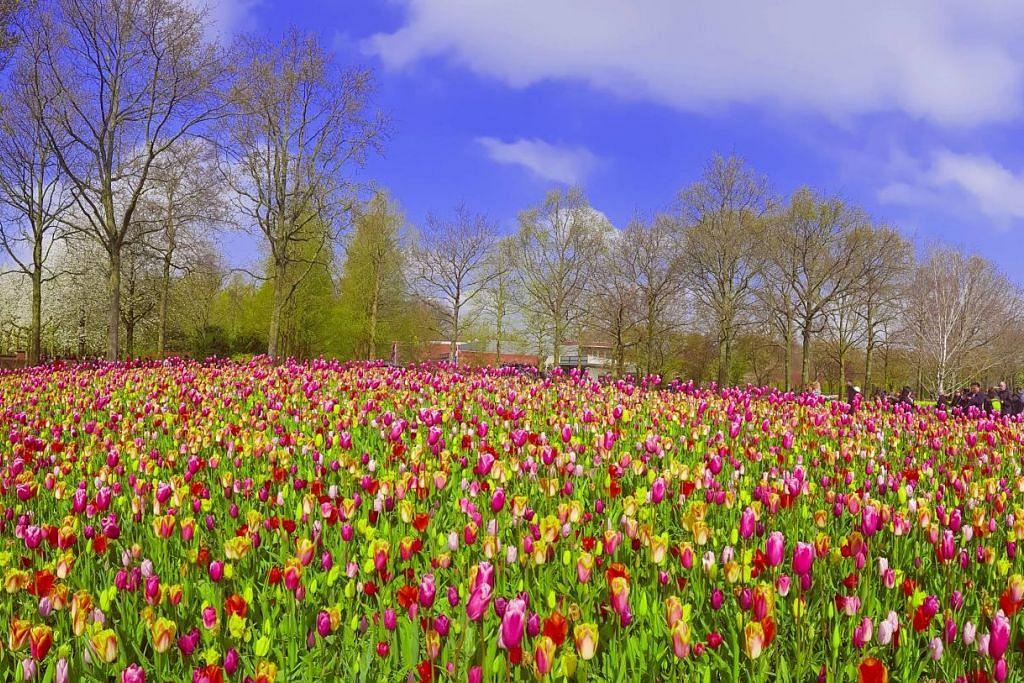 KEMBARA Terpesona! Indahnya taman Amsterdam