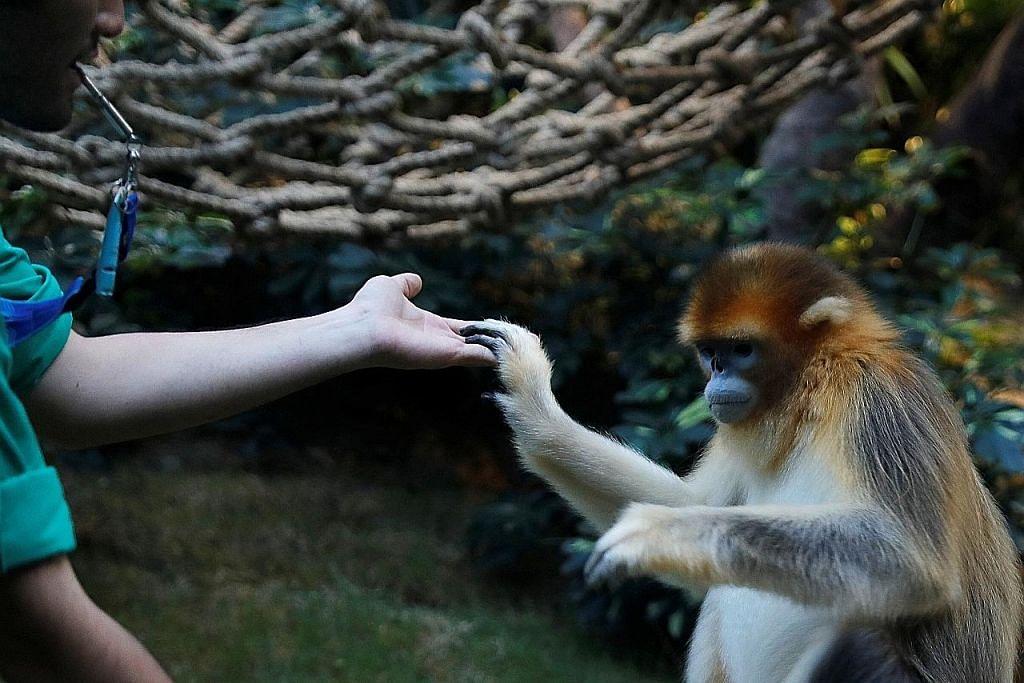 'Seven Worlds, One Planet' papar spesis, tabiat haiwan belum pernah dilihat