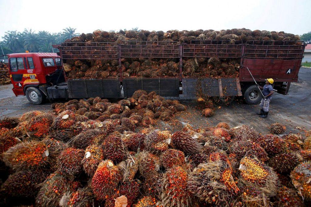 NIAGA TERJEJAS: Pekerja ini sedang memunggahkan biji kelapa sawit dari sebuah lori di sebuah kilang di Salak Tinggi, di pinggir Kuala Lumpur. Tengkarah India dengan Malaysia dijangka menjejas industri itu. - Foto REUTERS