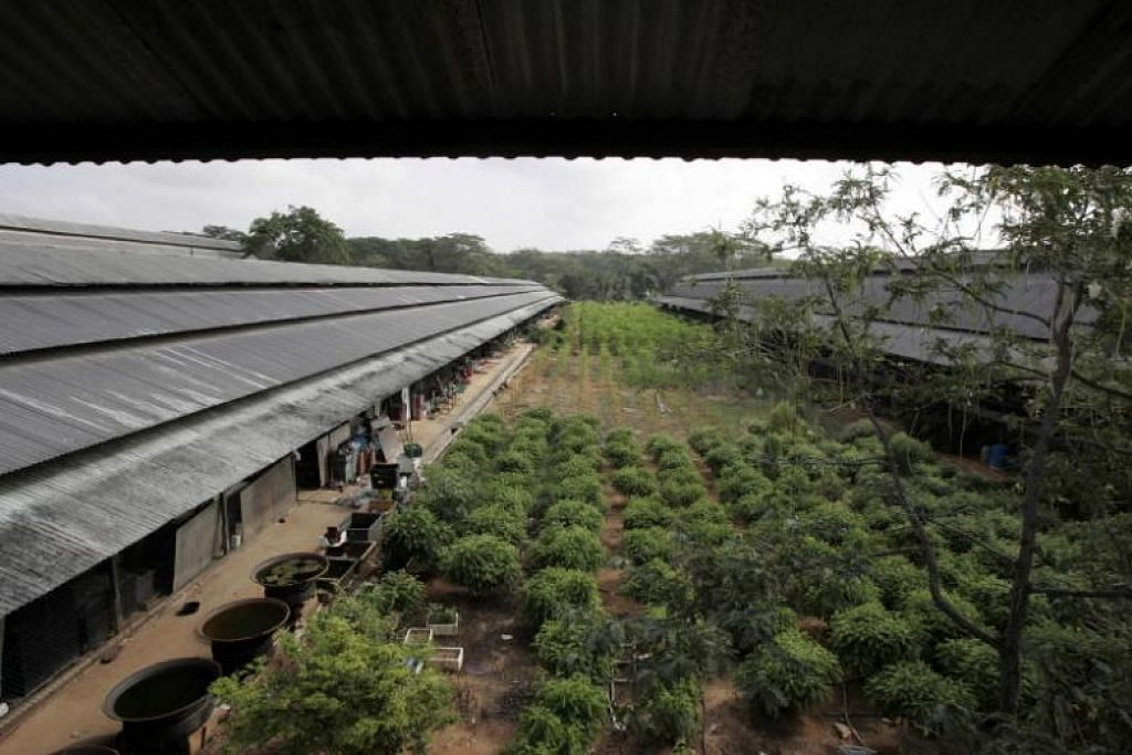 Tempat di Malaysian Feedmills Farms yang dipercayai digunakan untuk menyimpan bahan binaan. FOTO: FAIL ST