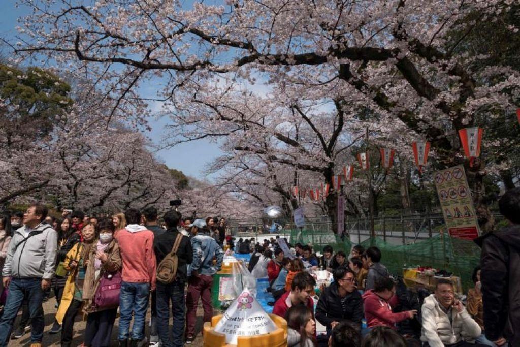 Para pengunjung menikmati keindahan bunga sakura yang mekar di Taman Ueno di Tokyo pada 31 Mac tahun lalu.