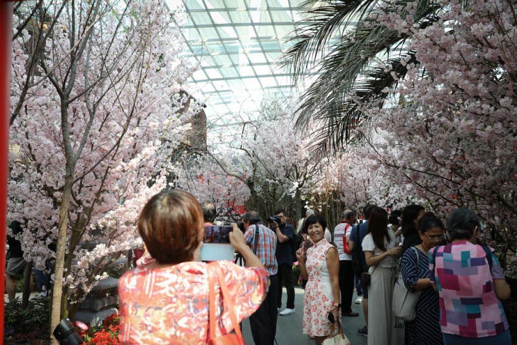 SAKURA DI SINGAPURA: Pesta Sakura Matsuri di Taman di Persisiran akan berlangsung hingga 22 Mac.