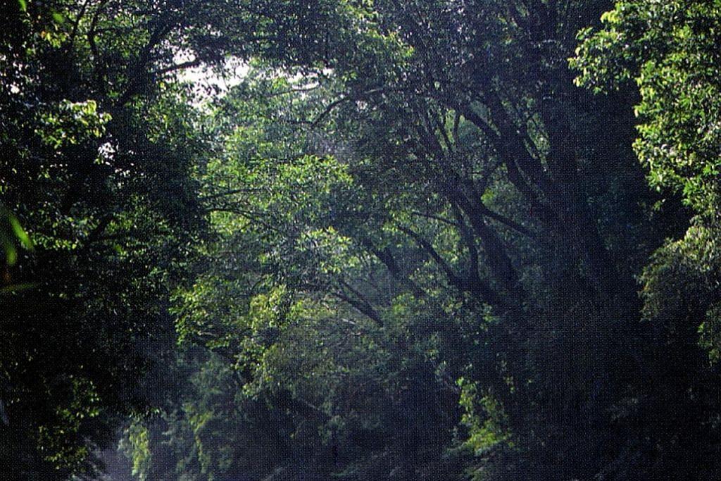 Tanam pokok selamatkan planet