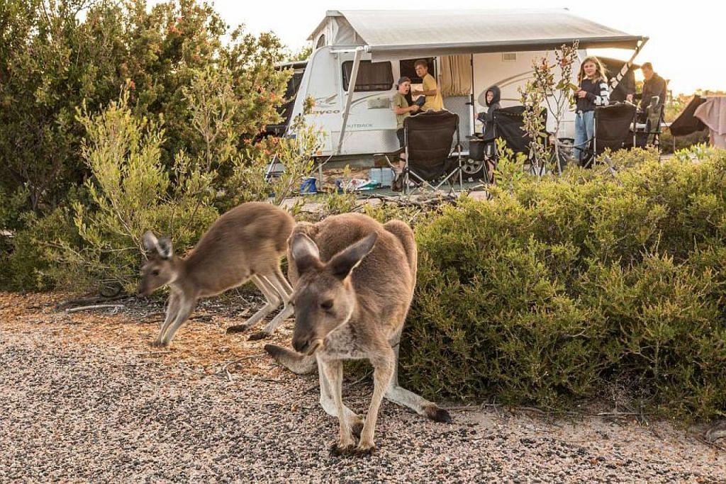 Taman Negara Australia jadi tumpuan di musim panas